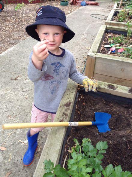 mt eliza house gardening